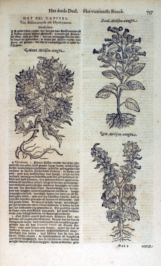 From the Dutch 'Cruydeboeck', a Herbarium written in 1554 that presents the first known illustration of tobacco.